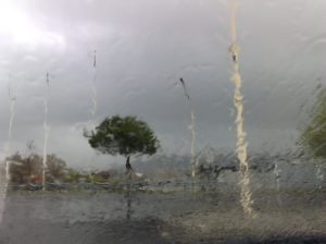 Tree_rain