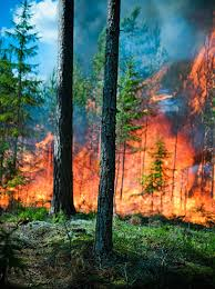 Woods on fire